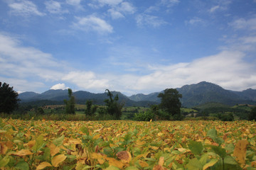 The Nature of PAI, Northern Thailand