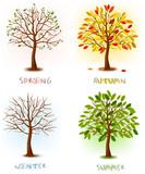 Fototapety Four seasons - spring, summer, autumn, winter. Art trees.