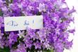 Für Sie! mit lila Blumen