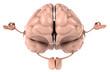 Cerveau zen