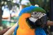 Macaw Headshot