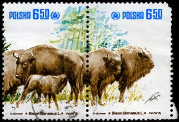 POLAND - CIRCA 1981 Wild Bison