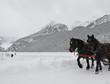 Sleigh ride, Lake Louise