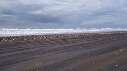 flock of birds resting on the Washinton coast