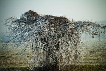 Albero congelato