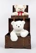 Teddybaeren Paar