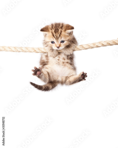 a cute kitten is climbing on the rope