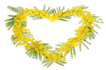 Mimosa - 8 Marzo
