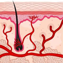 human skin cells