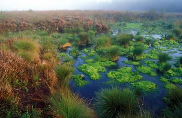 Moorgebiet im Nebel