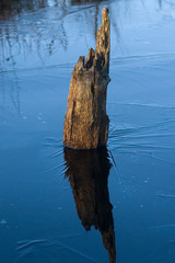 Totholz im Moor - Hochmoor Emsdettener Venn