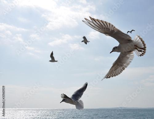 vol de mouettes en méditerranée