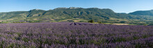 Provençaalse lavendel veld