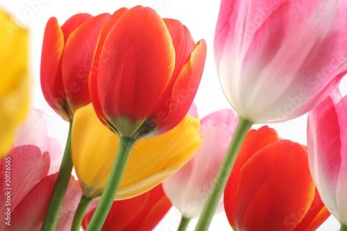 Zdjęcia na płótnie, fototapety na wymiar, obrazy na ścianę : Colorful tulips