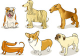 purebred dogs poster