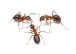 ants connecting with antennas to create network for action