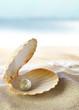 Leinwandbild Motiv Shell with a pearl