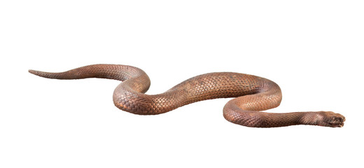 Metal Snake