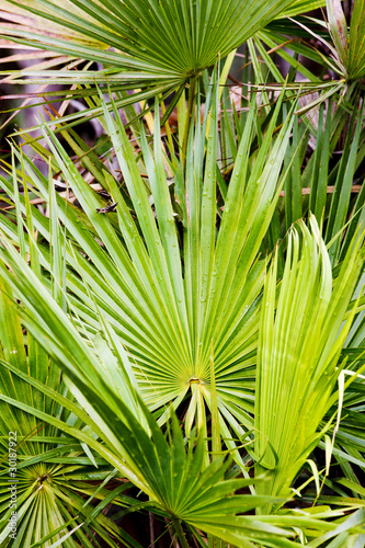 vegetation in Everglades National Park, Florida, USA