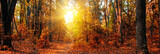 Panorama of a mixed forest at autumn sunny day - Fine Art prints