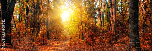 Panorama of a mixed forest at autumn sunny day