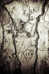 etchings in tree bark