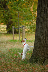Frustrated dog barking up the wrong tree?