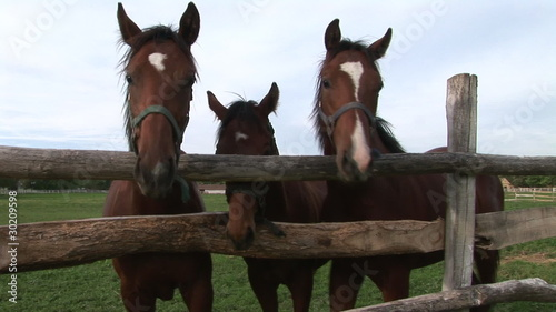Three beautiful horses as three friends