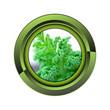 salade jardin jardinage plante plantation printemps bouton