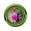 rose jardin jardinage plante plantation printemps bouton fleur