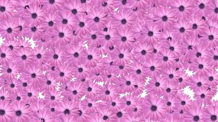 Flower background 2