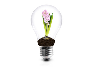 Lightbulb with plant