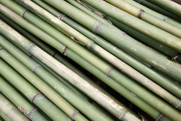Bamboo tube background