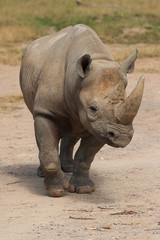 black rhino 9035
