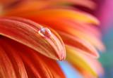 Fototapete Blühen - Blühen - Blume
