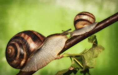 two snails on a tree