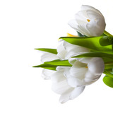 weiße Tulpen