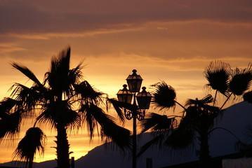 palme al tramonto