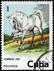 CUBA - CIRCA 1981 Horse 1c
