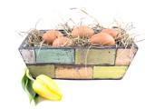 Eggs and yellow tulip in flowerpot