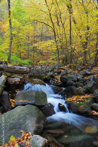 Autumn creek closeup with yellow maple trees