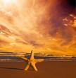 Starfish on summer beach at sunset. Travel, vacation
