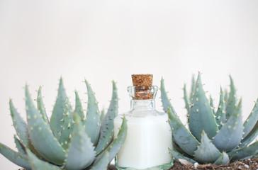 lait et cactus