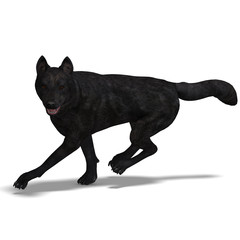 Black Wolf. 3D rendering with clipping path and shadow over