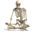 anatomical correct male skeleton. 3D rendering with clipping