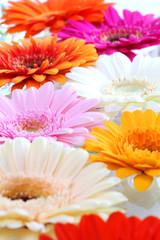Farbenfrohes Blumenmeer im Frühling