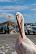 Famous pelican in Mykonos