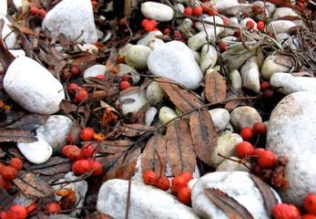 Herbstlaub und Beeren auf weißem Kies
