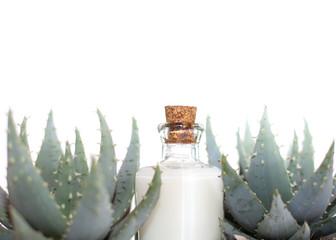 lait de cactus
