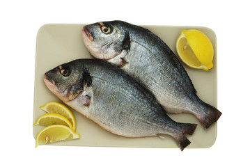 Two raw denis fishes on plate